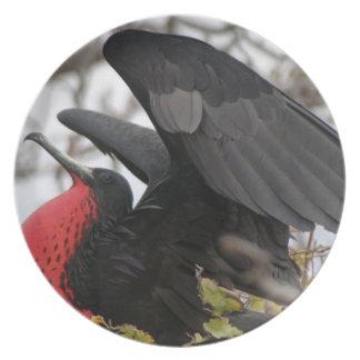 Pájaro de fragata magnífico platos de comidas