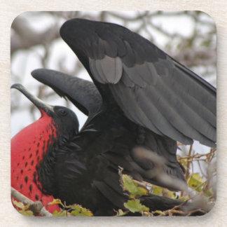 Pájaro de fragata magnífico posavasos de bebida