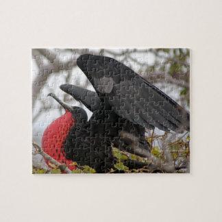 Pájaro de fragata magnífico rompecabezas con fotos
