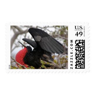 Pájaro de fragata magnífico sello