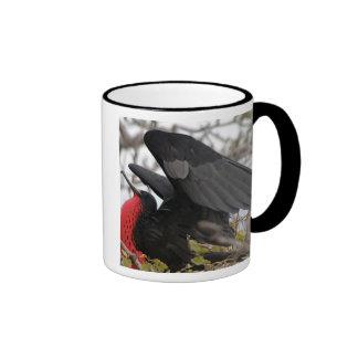 Pájaro de fragata magnífico taza de dos colores