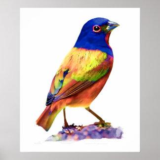 Pájaro de golpe ligero pintado acuarela de la póster