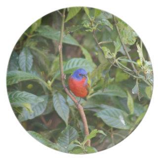 Pájaro de golpe ligero pintado colorido plato de comida