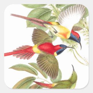 Pájaro de Goulds Sunbird Pegatina Cuadrada