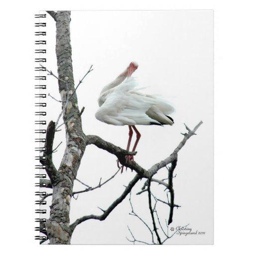 Pájaro de Ibis que presenta el cuaderno