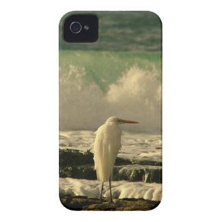 Pájaro de la alta marea carcasa para iPhone 4