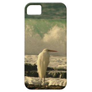 Pájaro de la alta marea iPhone 5 cárcasas