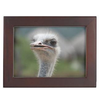 Pájaro de la avestruz caja de recuerdos