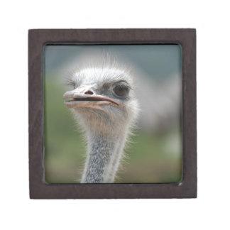 Pájaro de la avestruz caja de regalo de calidad