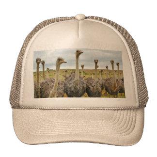 Pájaro de la avestruz gorras de camionero