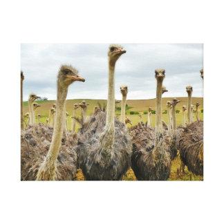 Pájaro de la avestruz impresiones en lona