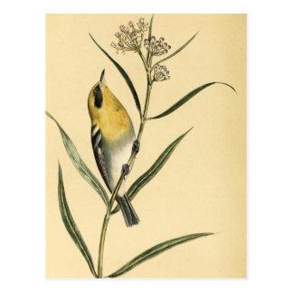 Pájaro de la curruca amarilla del vintage postales