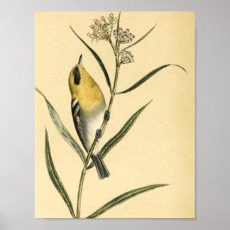 Pájaro de la curruca amarilla del vintage póster