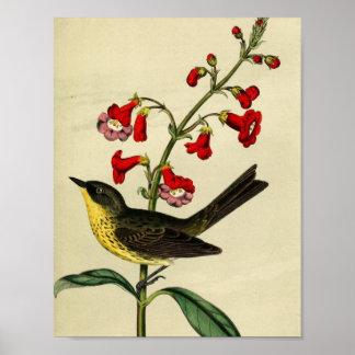 Pájaro de la curruca de Kirtlands del vintage Posters