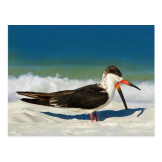 Pájaro de la desnatadora en la postal de la playa