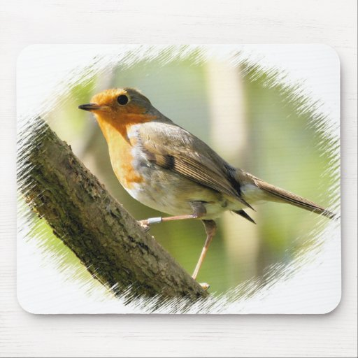 Pájaro de la fauna del petirrojo alfombrilla de ratón