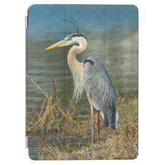 Pájaro de la garza de gran azul cubierta de iPad air