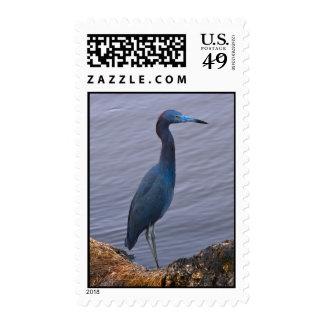 Pájaro de la garza de pequeño azul sellos