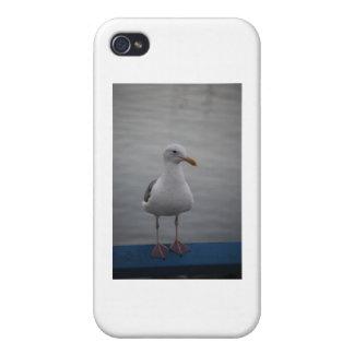 Pájaro de la gaviota iPhone 4 cárcasa