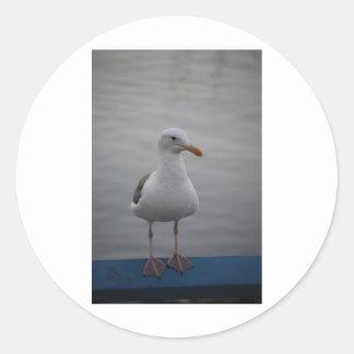 Pájaro de la gaviota pegatina redonda