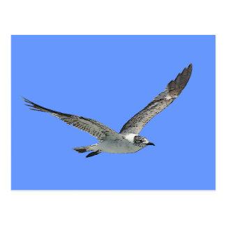 Pájaro de la gaviota postal