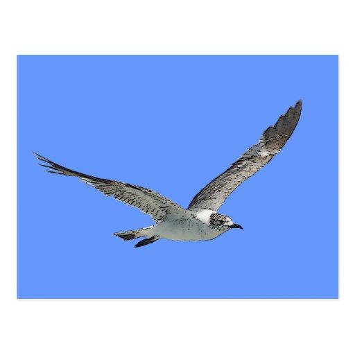 Pájaro de la gaviota tarjeta postal