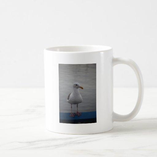 Pájaro de la gaviota tazas