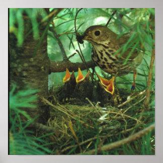 Pájaro de la madre que alimenta a pájaros de bebé póster