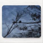 Pájaro de la niebla de la mañana en las ramas Mous Tapete De Raton