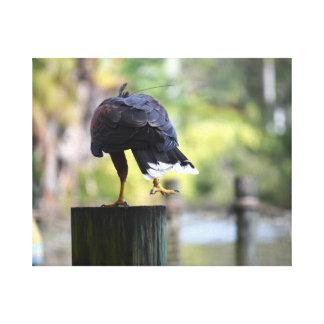pájaro de la opinión de la parte posterior de la p impresiones de lienzo
