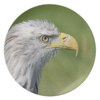Pájaro de la placa de la presa plato de cena