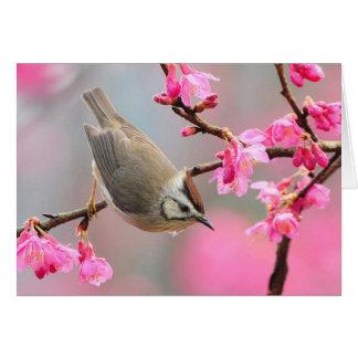 Pájaro de la primavera tarjeta de felicitación