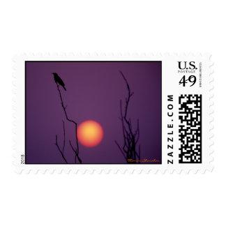 Pájaro de la puesta del sol del gancho de Sandy Sellos