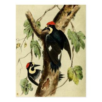 Pájaro de la pulsación de corriente del vintage postal