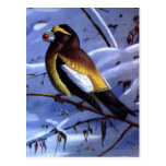 Pájaro de la tarde de Weber Postal