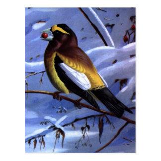Pájaro de la tarde de Weber Tarjeta Postal