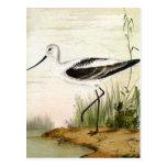 Pájaro de la vida marina del vintage, Avocet, aves Tarjetas Postales