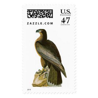 Pájaro de los pájaros de Washington Juan Audubon Sello Postal