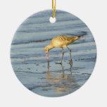 Pájaro de mar adornos