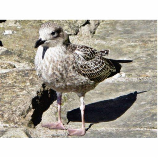 Pájaro de mar Beaked negro Fotoescultura Vertical