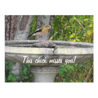 Pájaro de mirada enojado con su frase postales