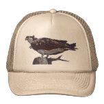 Pájaro de Osprey Gorra
