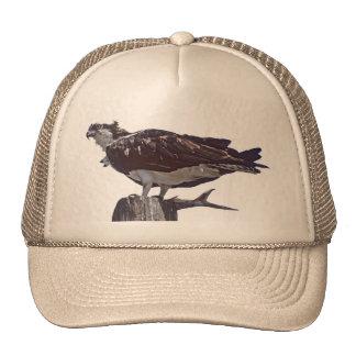 Pájaro de Osprey Gorros
