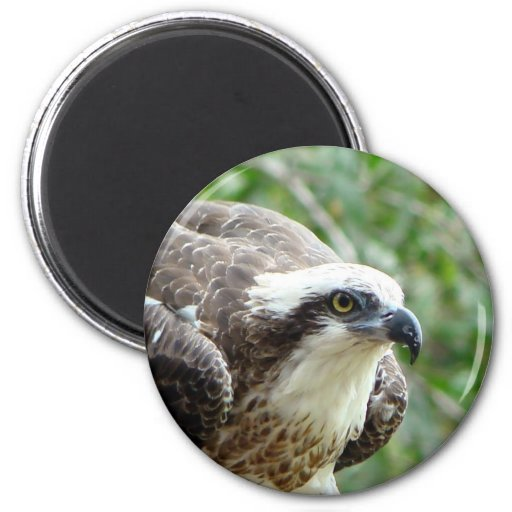 Pájaro de Osprey Imán De Nevera