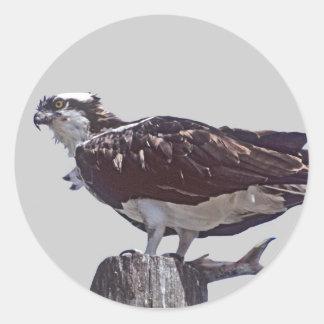 Pájaro de Osprey Pegatina Redonda