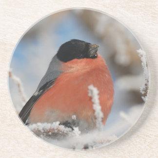 Pájaro de pecho rojo en árbol helado posavasos manualidades