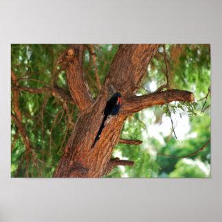 Pájaro de Redbilled Woodhoopoe Póster