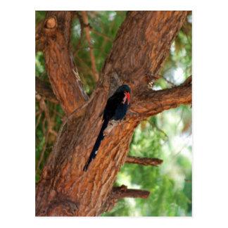 Pájaro de Redbilled Woodhoopoe Tarjeta Postal