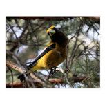 Pájaro de tarde postales