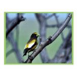 Pájaro de tarde tarjetas postales